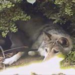 ちょっと失礼しますよ…弟妹たちの間に割り込んでお母さんに甘える狼の子がかわいい