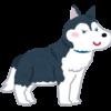 【よそ見注意】まるでカートゥーンのように池に落ちるハスキー犬がかわいそかわいい